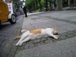 路上で爆睡1