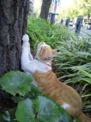 爪とぎの木