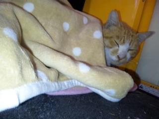 あったか毛布