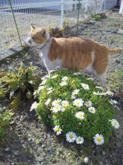 ぼくの花畑!