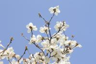 白い花の似合う街3