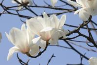 白い花の似合う街1