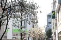 白い花の似合う街10a