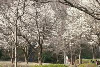 白い花の似合う街7a