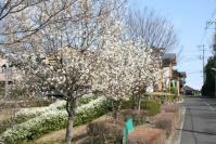 白い花の似合う街4a