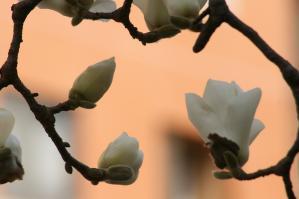 白い花の似合う街