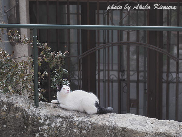 ausouis_cat_01