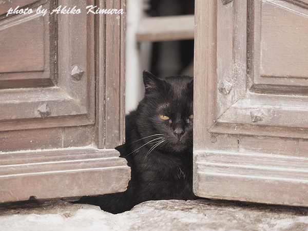 bonnieux_cat_03