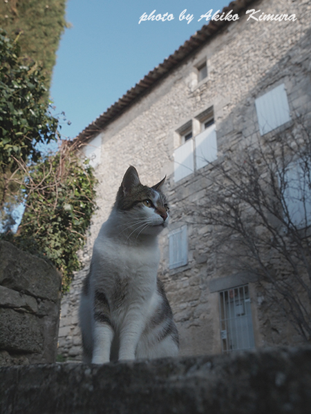 bonnieux_cat_05
