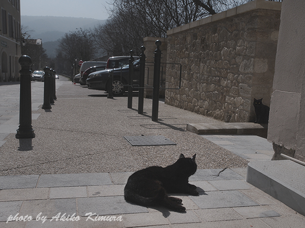 menerbes_cat_01