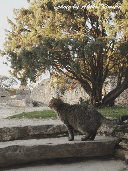 village_des_bories_cat_01
