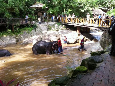 ゾウの水浴び