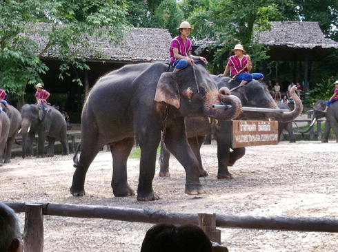 ゾウの行進