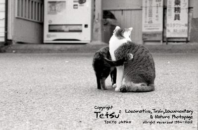 20120313高滝 駅猫01