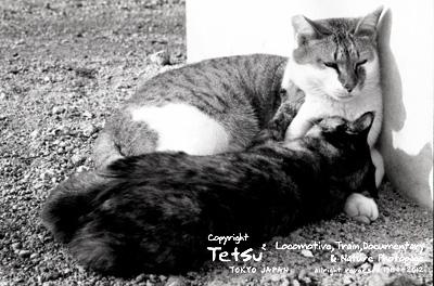 20120313高滝 駅猫02
