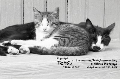 20120611高滝・猫02