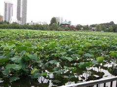 2012_07162012東京0016