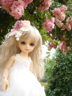 o-kusyon+008_convert_20120701211932.jpg