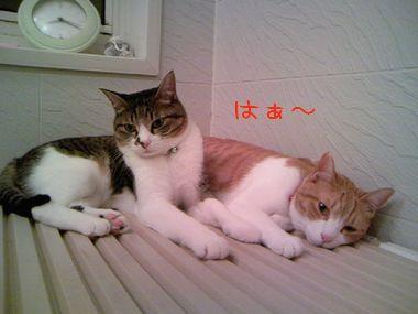 PAP_0295-20100520.jpg