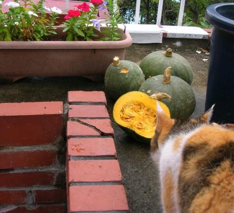 我が家のかぼちゃ2