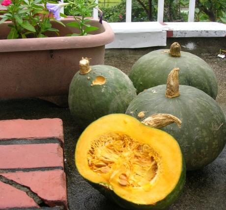 我が家のかぼちゃ
