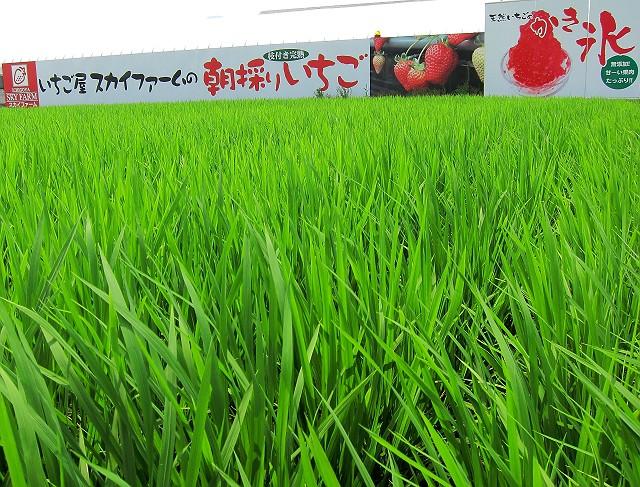 0730-itigoya-07-S.jpg