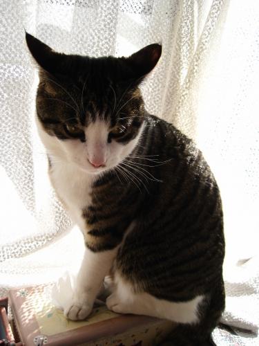 ミミズク猫