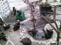 熊牧場にて
