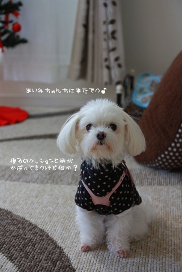 IMG2011_2402.jpg