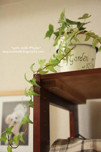 IMG201209_9962.jpg