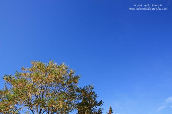 IMG201211_1146.jpg