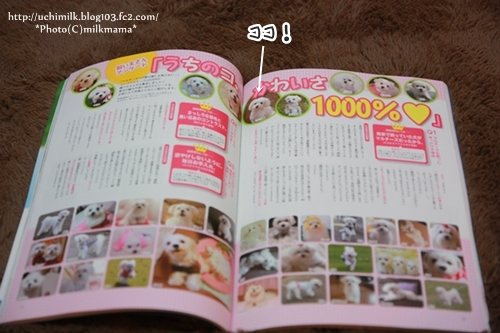 IMG2012_4209.jpg
