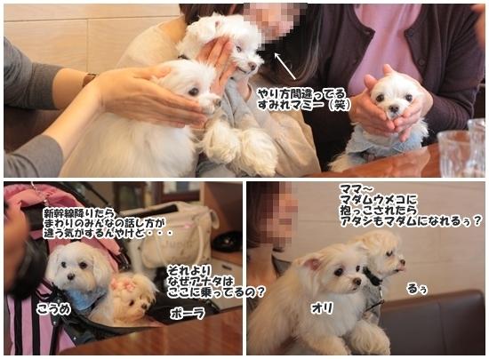 page201301umekoohu2.jpg
