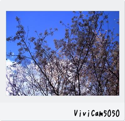 PICT0545.jpg