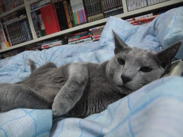 リモコン枕