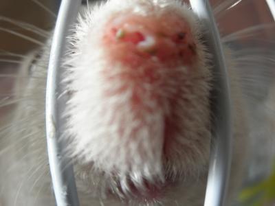 すぅ子さんの鼻