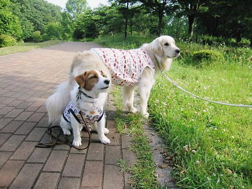 2011長岡公園386