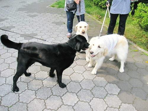 2011長岡公園397