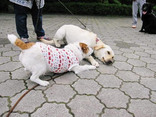 2011長岡公園399