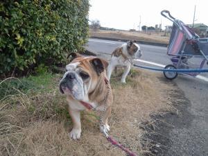 03日 お散歩 (3)