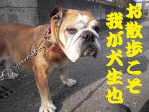 22日 お散歩 (4)