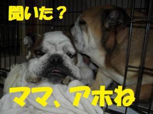 16日 寝ウメピン (2)