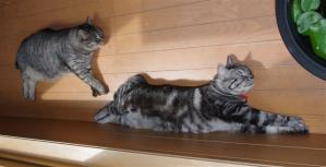 2匹の昼寝