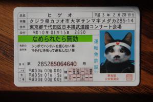 IMGP4115舐めネコ