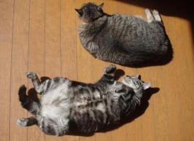 IMGP4145日向のネコ