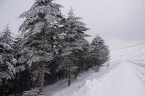 IMGP4797車山高原ニッコウキスゲ群生地