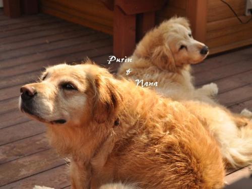100617+Dogrun+Airy+016_convert_20100618175840.jpg