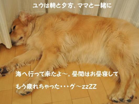 110118+007_convert_20110118203501.jpg