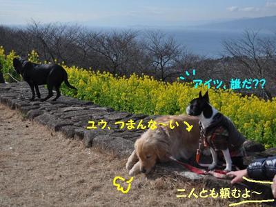 二ノ宮吾妻山公園 005