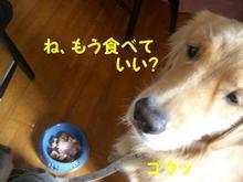 伊豆旅行(8月21・22) 200